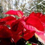 God Jul och Gott Nytt År önskas våra drygt 10 000 medlemmar!